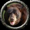 Bark (bear)
