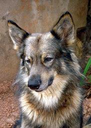 Xa (the Dog)