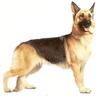Si Anjing
