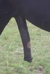 Peler Kuda