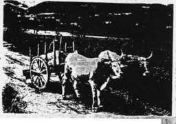 The Cart