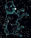 Starlit Canis