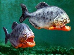 Piranha squad