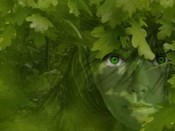 Zeleny Stroma