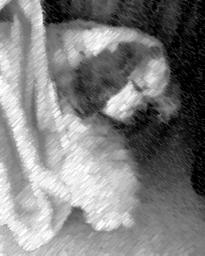 Plush Spaniel of Healing