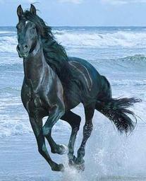 Steve the horse