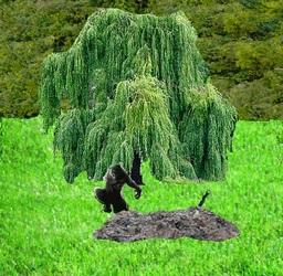 Salix, the Hidden