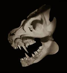 Skull of Gubbio Hircus