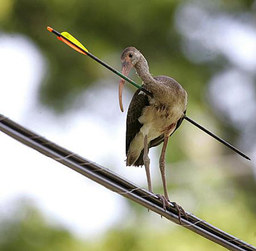 Catherine's indestructible bird