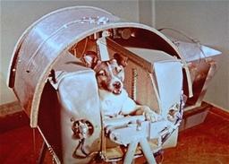 Moses Mattick/Space Dog