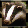 badgerish