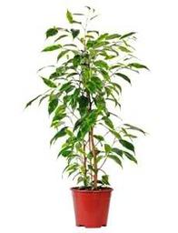 Jack Valentine's Plant