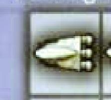 Launch Alpha (TDLS-SL8055-A)